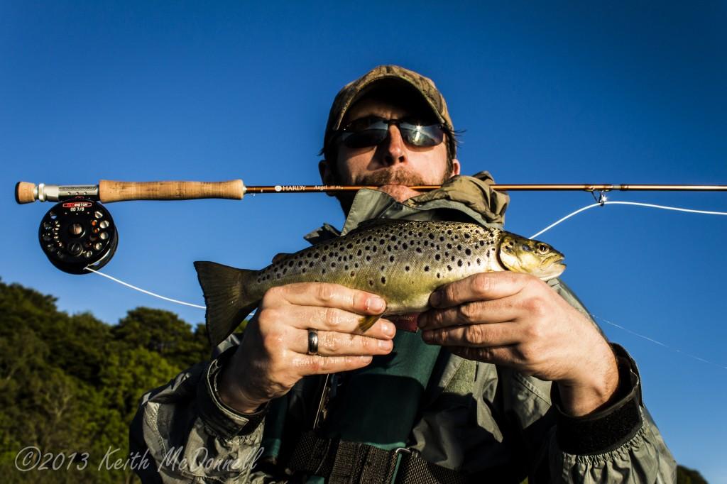Ireland Brown trout