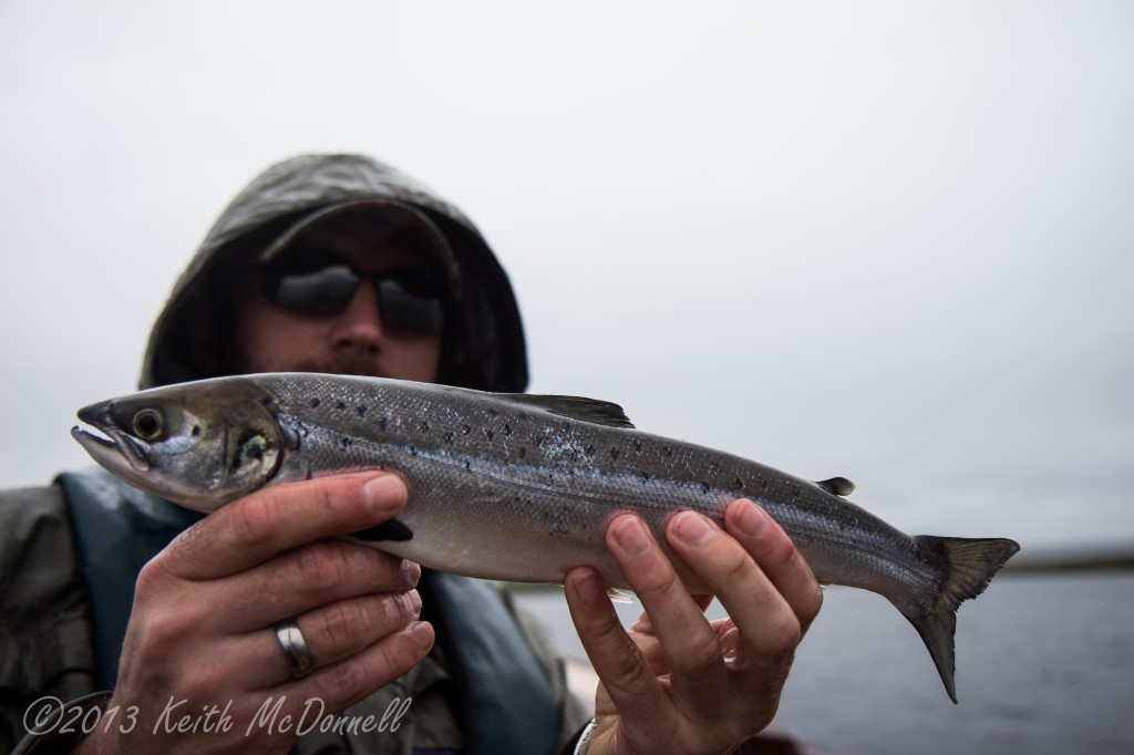 Salmon Ireland