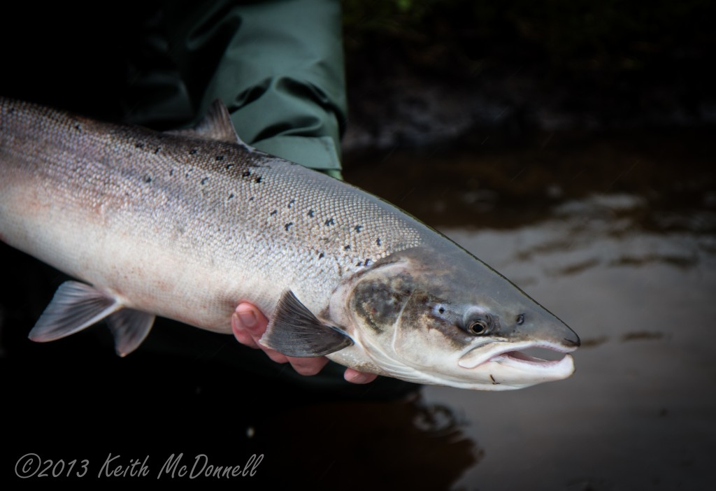 Fly Fishing for Salmon Ireland
