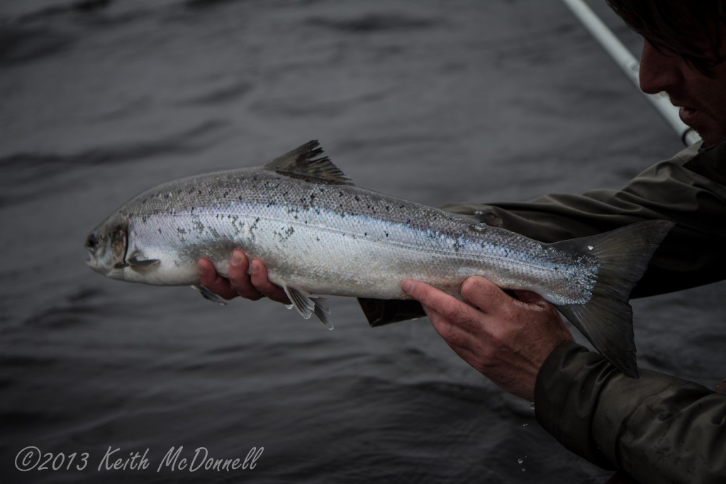 Fly Fishing for Salmon Ireland Catch and Release
