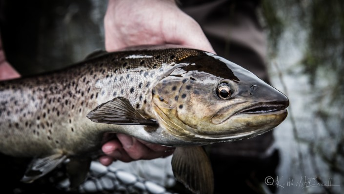 Kylemore abbey sea trout fishng
